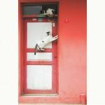 Romeo and Juliet? *latergram* #cats #turchia #turkishcats #istanbul #turkey #turkyie #instagramturkey #gatti #doors #prettydoors #anadolukavagi #funnypictures #nikon #d40