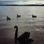 Good morning #newzealand #lakerotoiti #rotorua #nuovazelanda