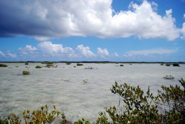 Cuba: la strada per cayo Las Brujas, bellissima spiaggia cubana