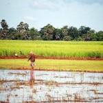 Battambang, Cambogia *latergram* #cambodge #cambodia #ricepaddies
