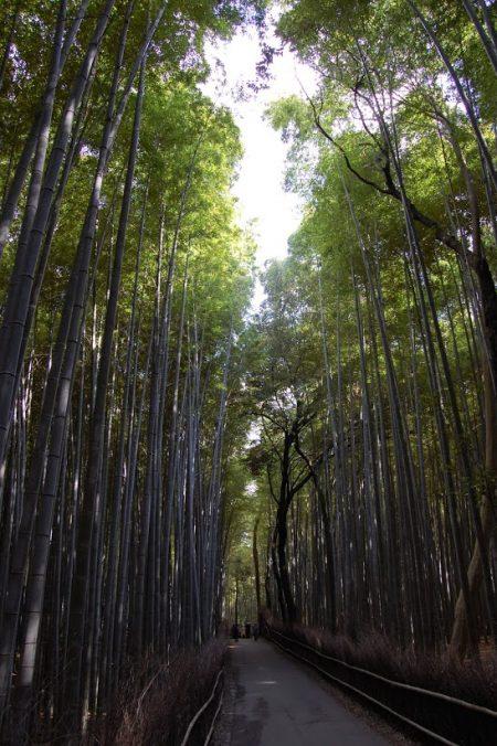 Arashiyama: la foresta di bambù