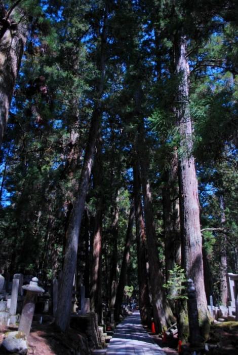 Il cimitero Oku-no-in sul monte Koya
