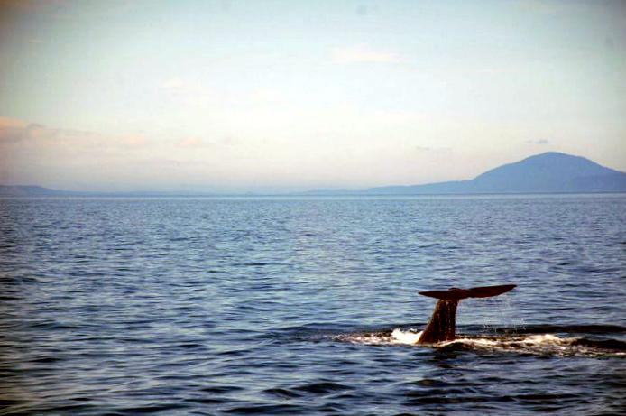 Cinque posti dove vedere le balene