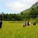 Trekking in Laos: nella giungla a Nam Ha