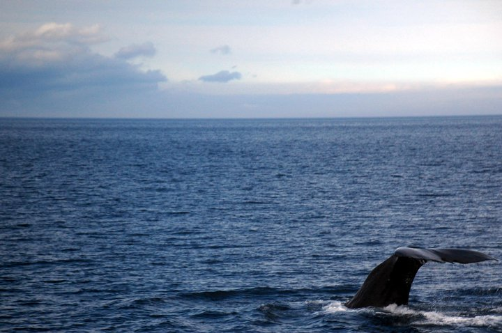 dove vedere le balene: whale watching in Giappone