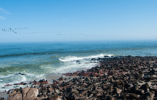 Le otarie a Cape Cross, Namibia