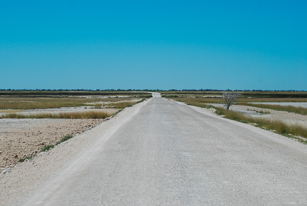 Namibia in auto: una strada dell' Etosha National Park