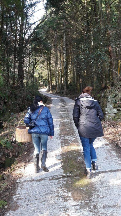 Un giro nel bosco a raccogliere funghi shiitake