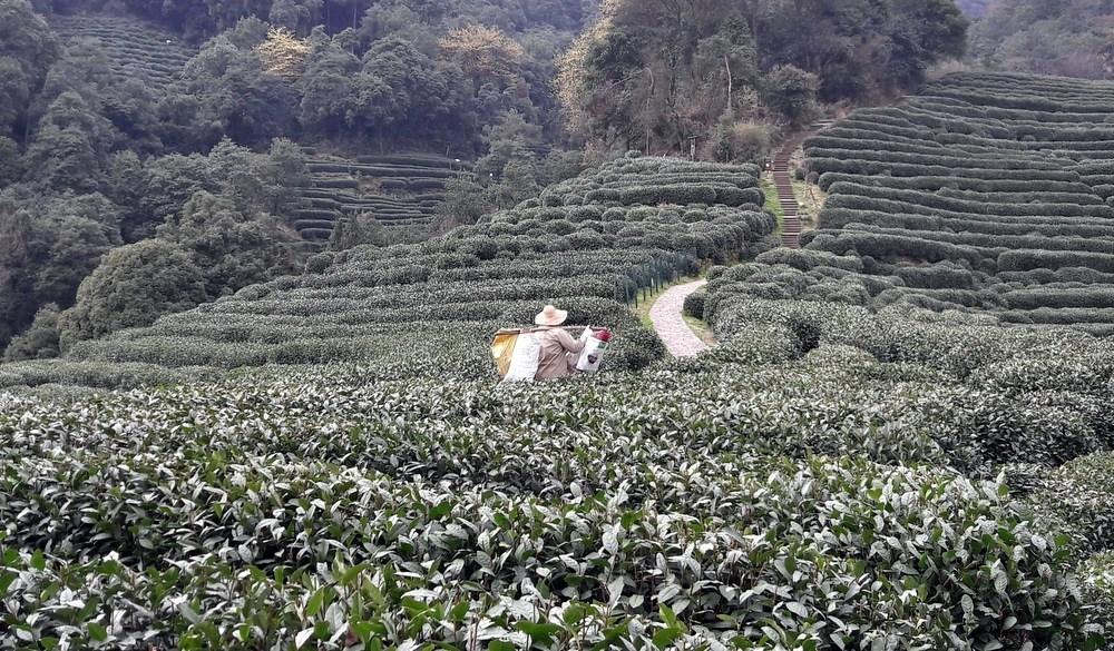 Chengdu siti di incontri